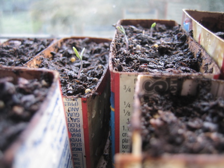 Seedlings are sprouting!